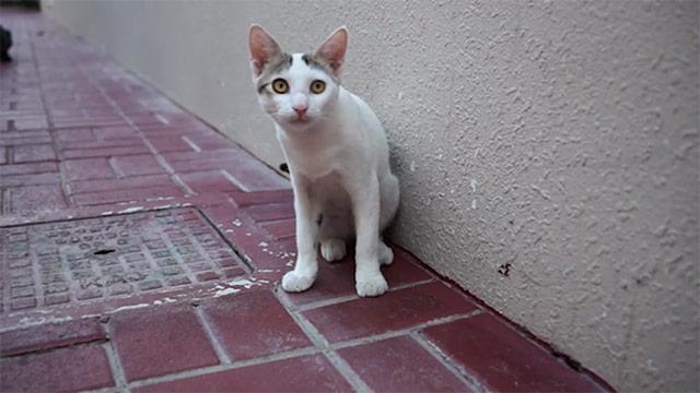 ドバイ発!捨てられた車から動物の鳴き声が…ペットの遺棄に警鐘を鳴らす…