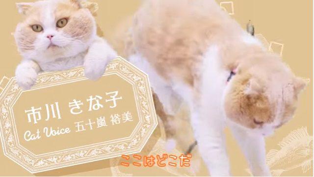 登場猫紹介
